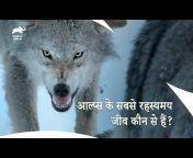 Animal Planet India
