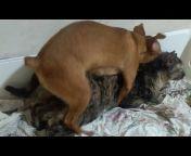Animals Mating Video