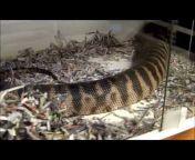 F.N.L Reptile Chat